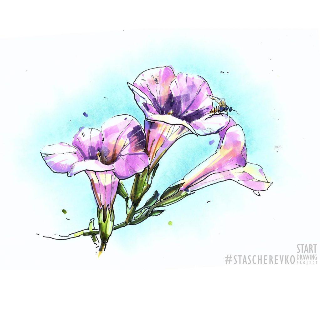 Ris. 5 Primer botanicheskogo sketcha